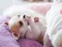 chiot couché lit