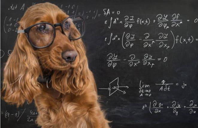 chien intellectuel lunettes sciences