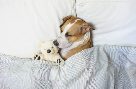 chien dort peluche