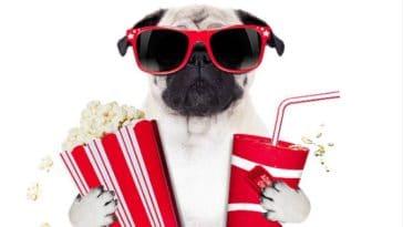 chien film cinéma