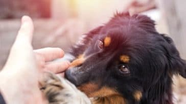 chien affection