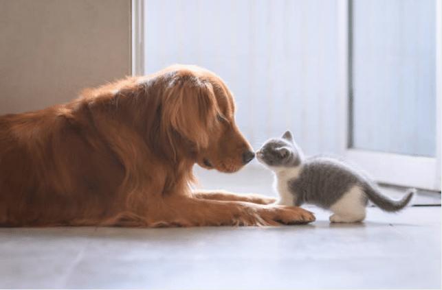 Comme chien et chat expressions