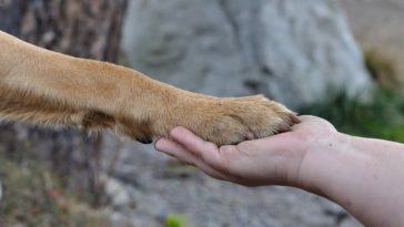 Patte chien main