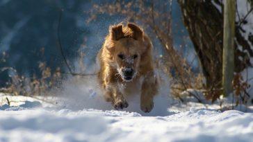 chien hiver