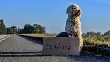 Route chien stop voyage