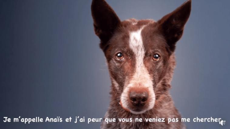 Anaïs chienne berge refuge