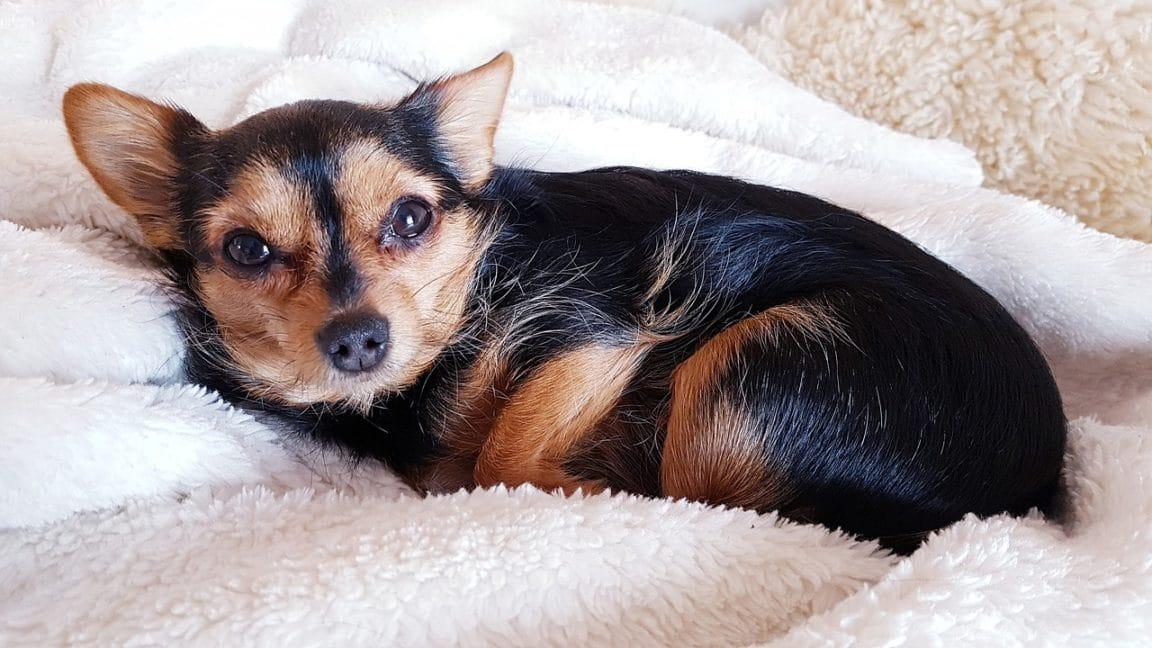 chien confort