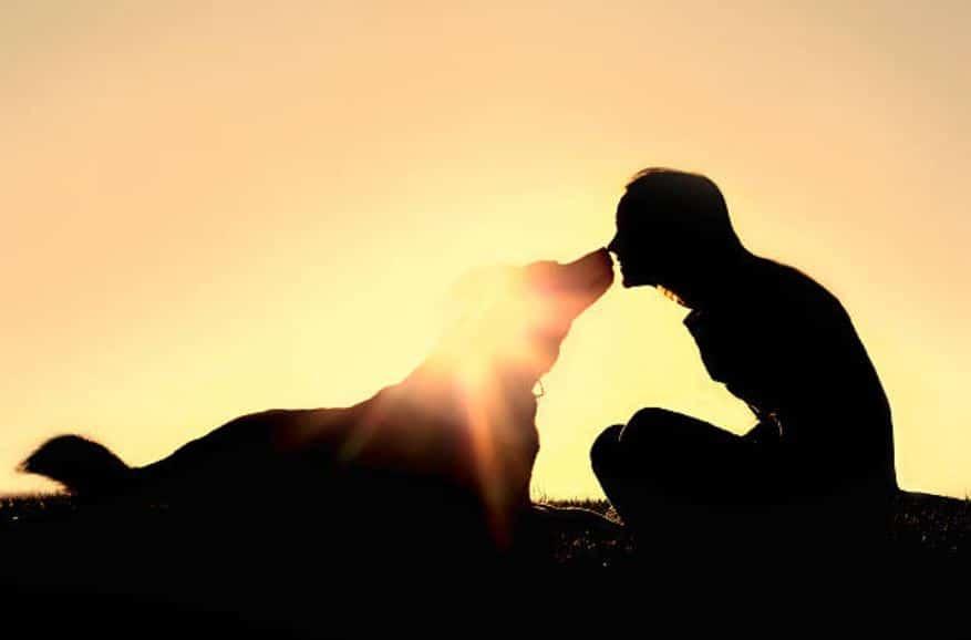 chien maitre confiance relation forte