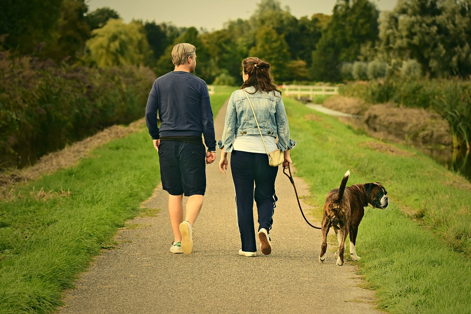 chien promenade laisse