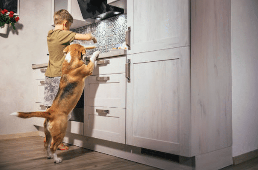 chien cuisine