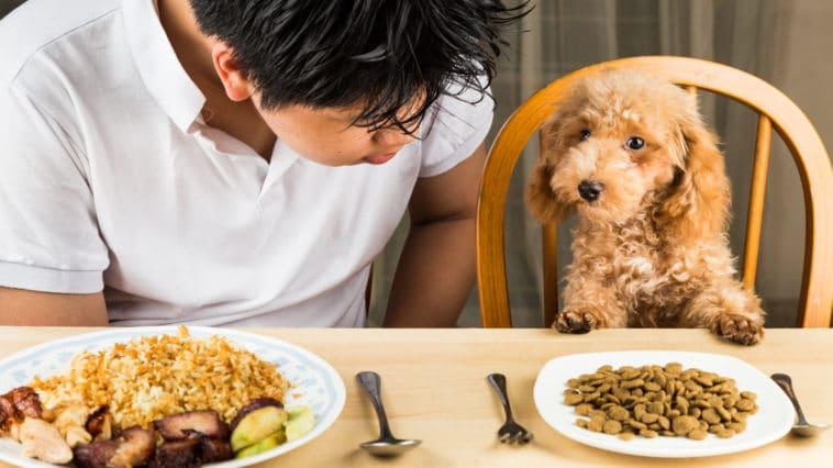 chien manger triste