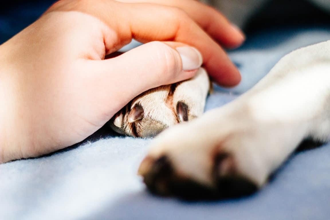 chien patte main homme