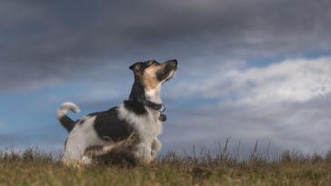 chien orage aventure