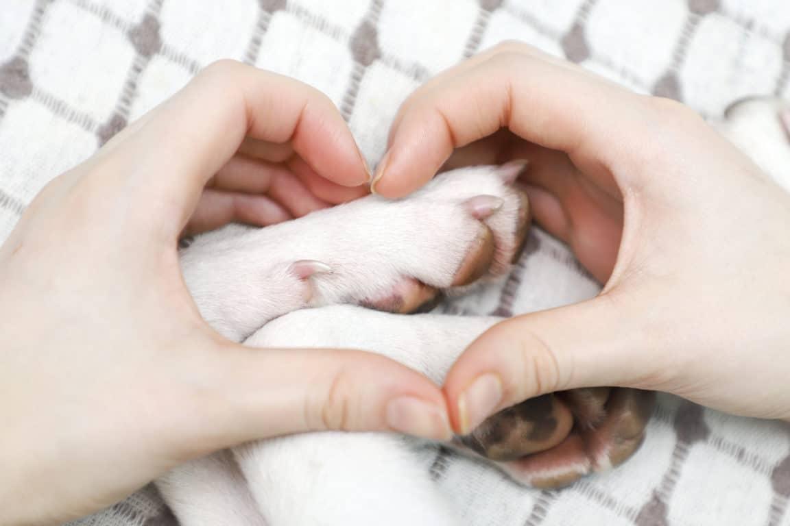 chien pattes doigts coeur