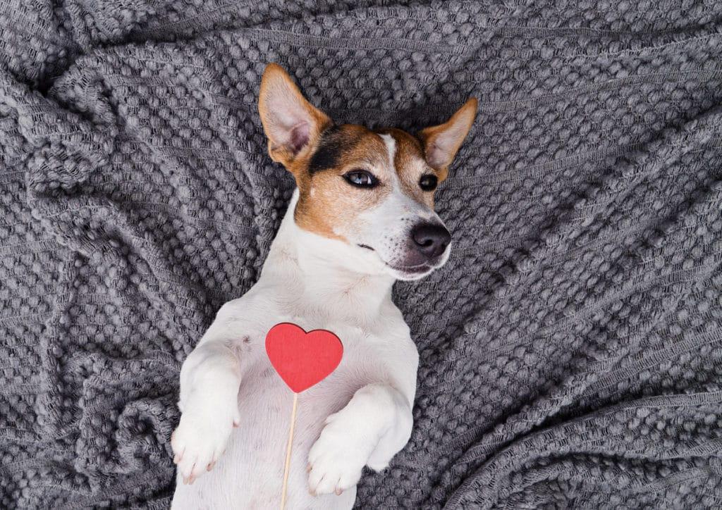 chien coeur