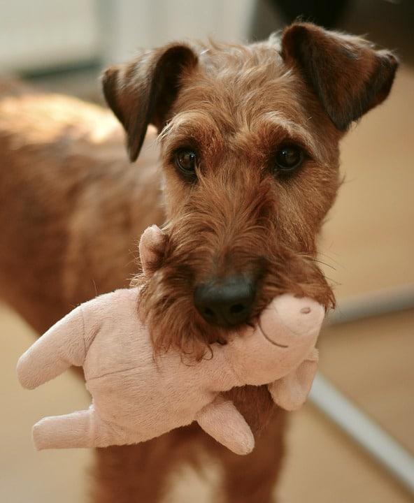 jouet chien intérieur maison