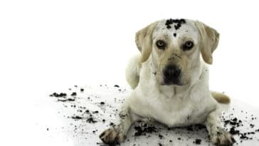 chien jouer terre sale
