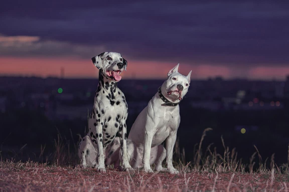 chien nuit garde écouter