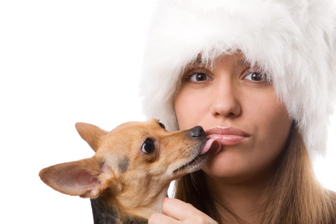 chien lécher bouche