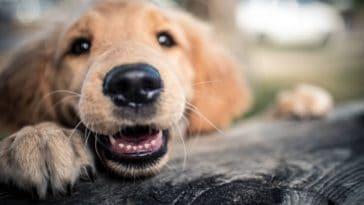 moustaches du chien