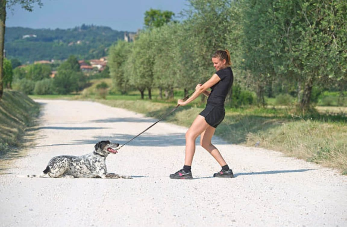 chien ne veut pas avancer promenade