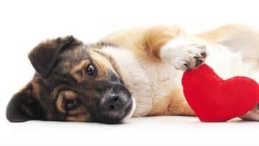 signes amour chien