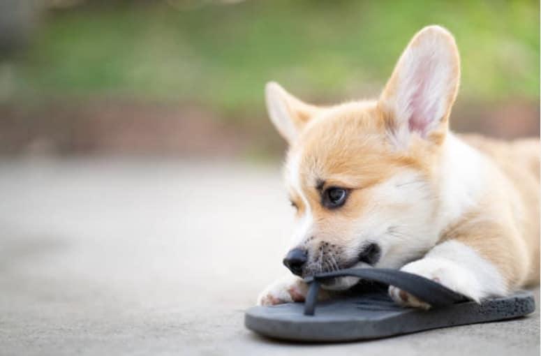 chien vole chaussure signes amour chien