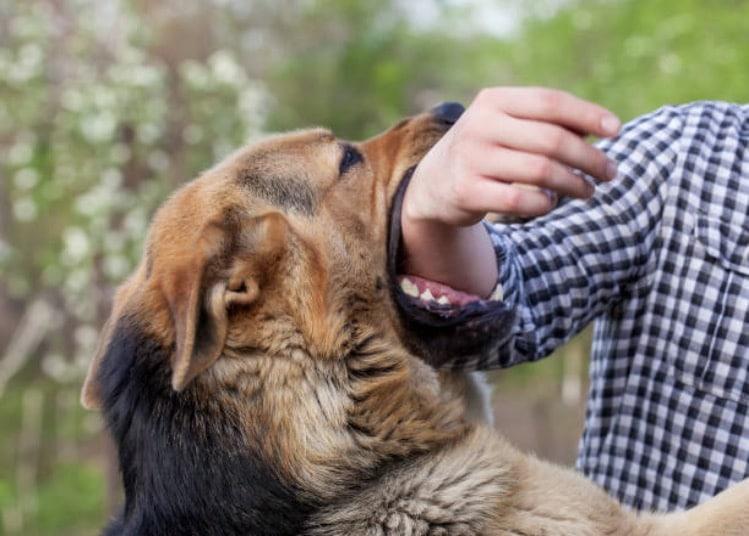 chien attaque chiens heros