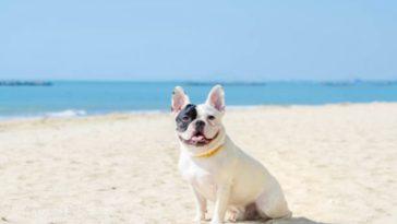 chien plage dangers