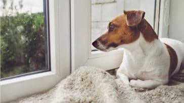 apprendre chien a rester seul
