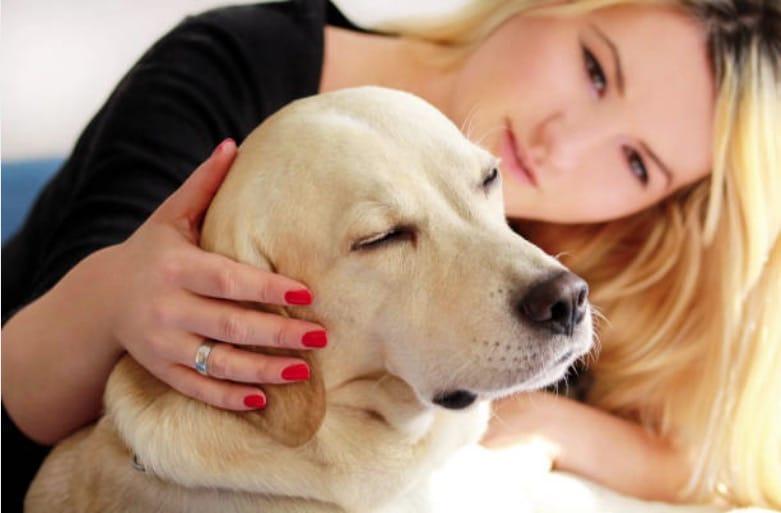 chien caresse apprendre chien a rester seul