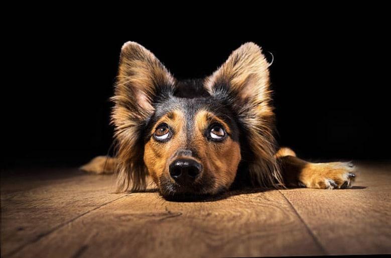 chien seul apprendre chien a être seul