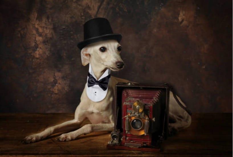 chien histoire musee du chien new york