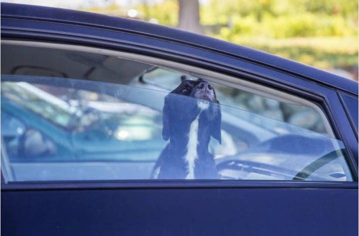 chien enferme voiture vitre ouverte