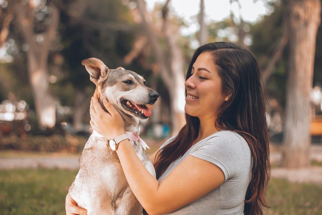 chien caresses signes amour chien