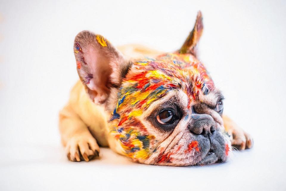 chien couleurs