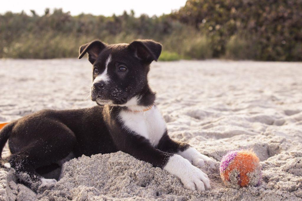 chien dangers plage sable