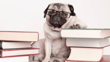 chien lunettes livres anecdotes
