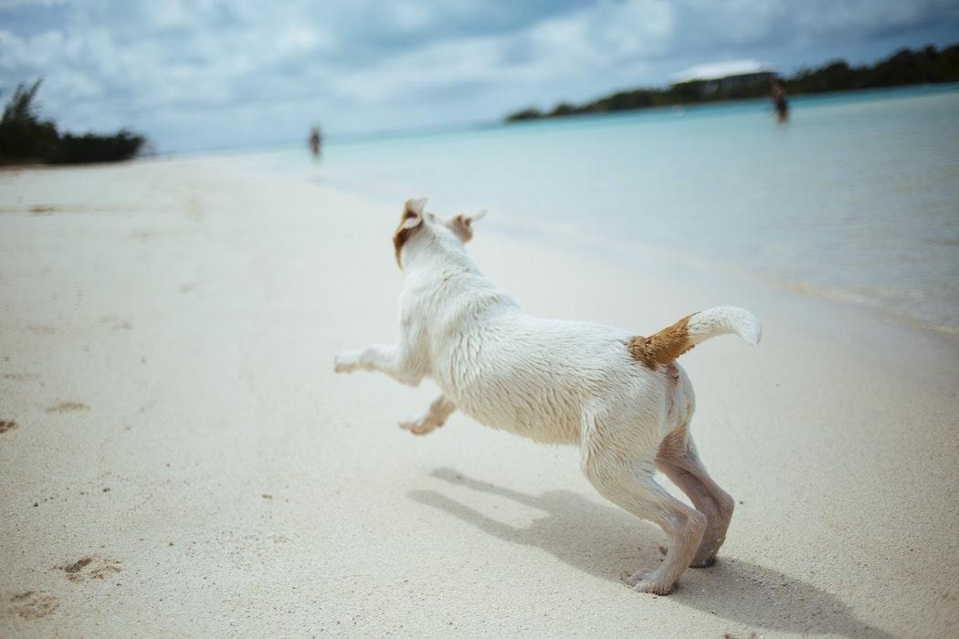 chien sur la plage dangers