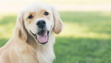 choisir un nom chien