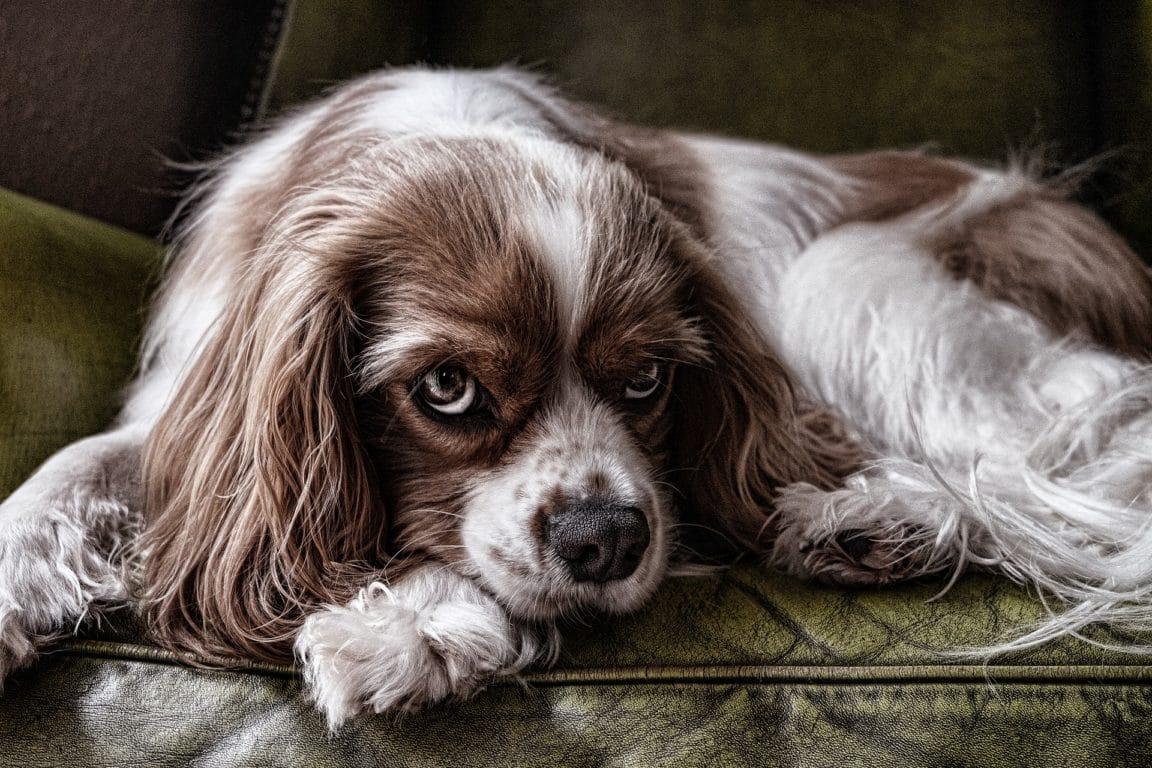 chien peur Fran__ / Pixabay