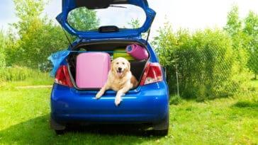 chien voiture vacances
