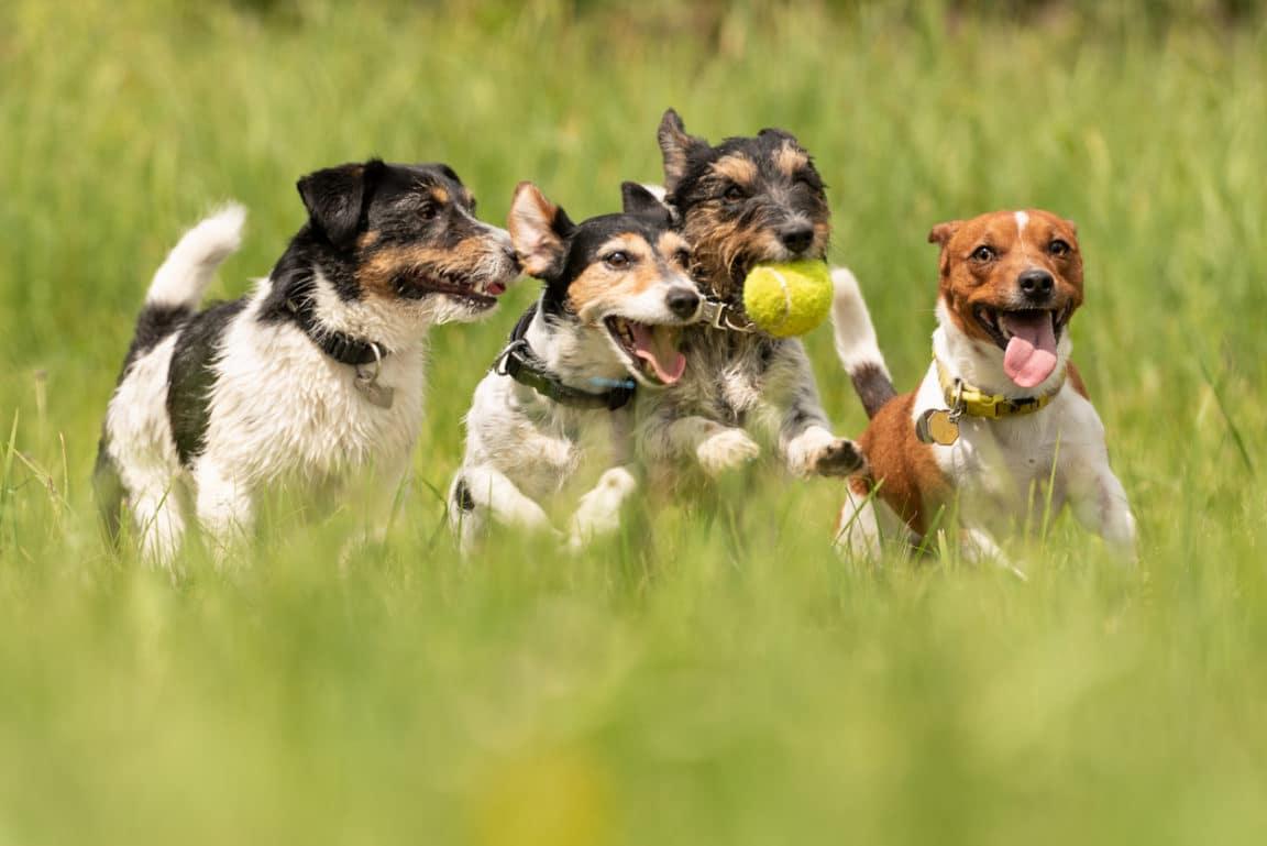 chien courir balle excitation
