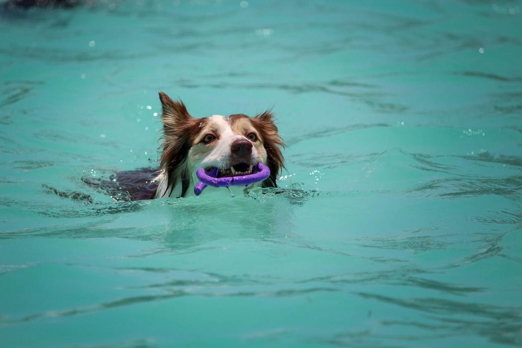 jouets flottants jeux d eau chien
