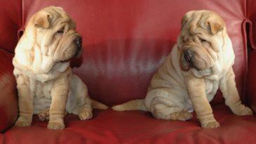 jumeaux christels / Pixabay