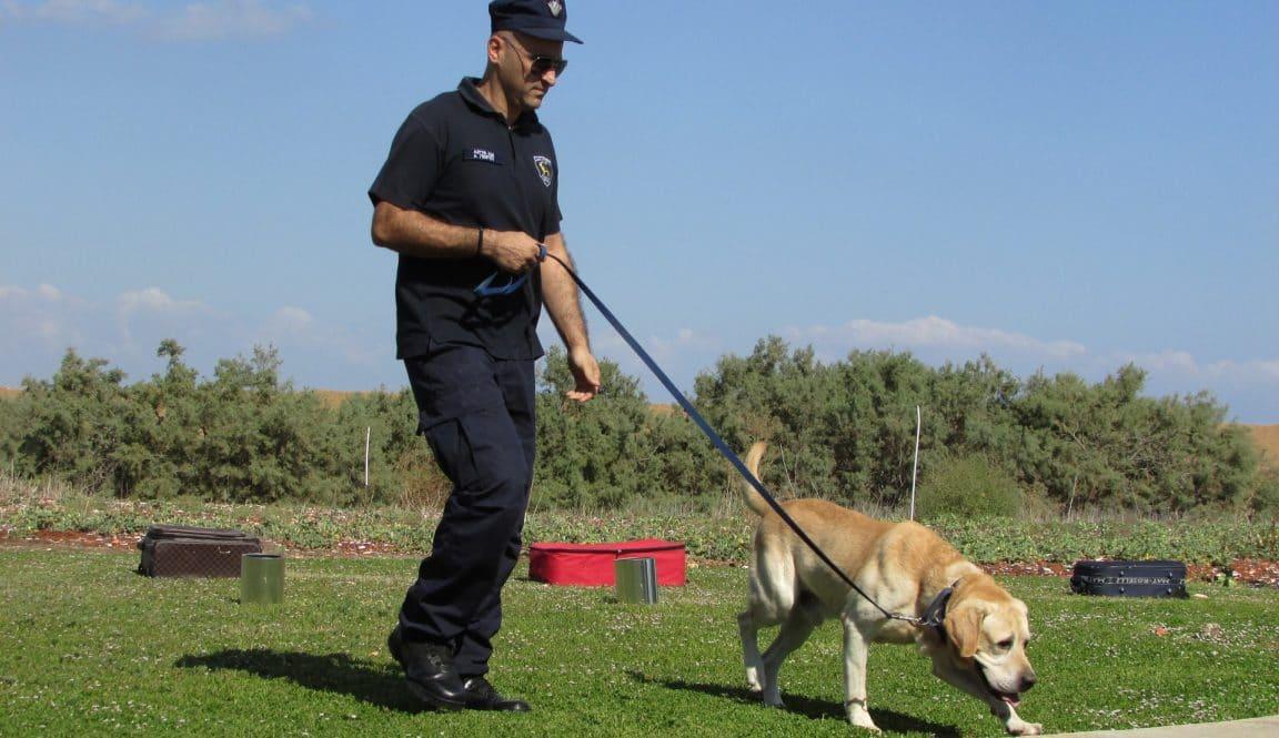 chien policier dimitrisvetsikas1969 / Pixabay