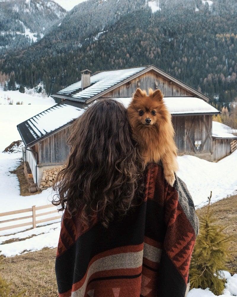 porter chien chien refuse d avancer promenade