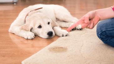 punition chien