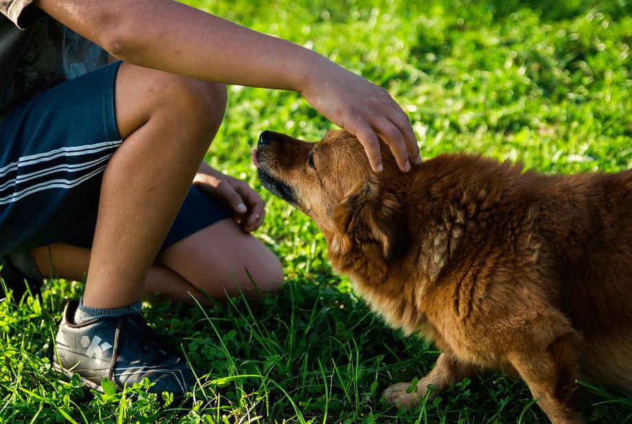 récompense chien