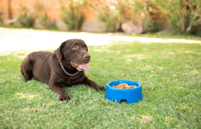 chien mange dehors